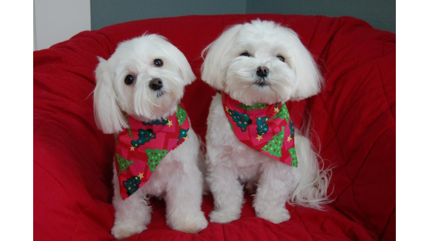 Why it is not a good idea to give pets for Christmas